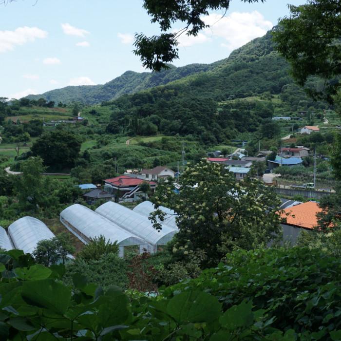 숲이랑사오랑마을