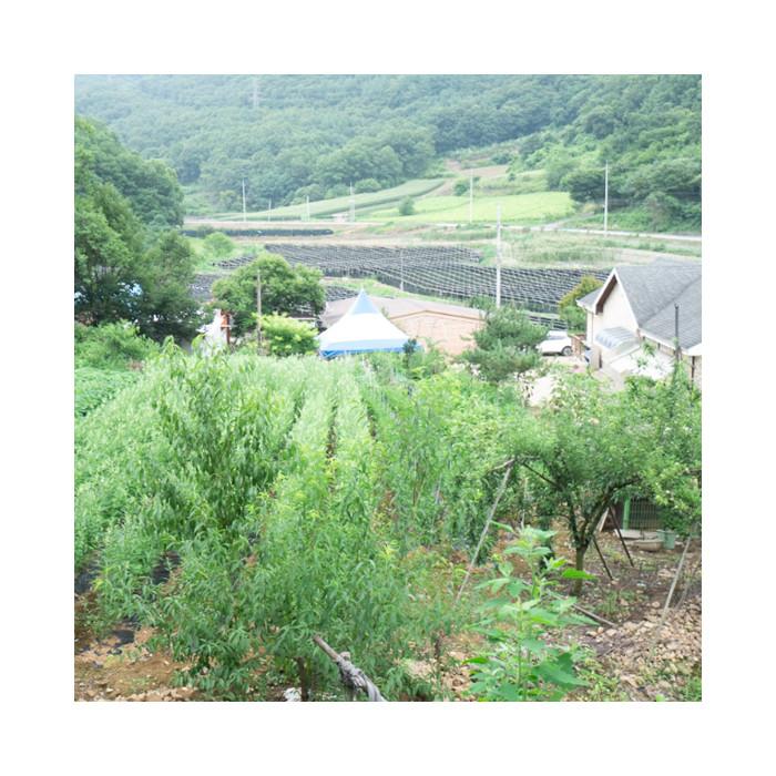 괴산 양달농장